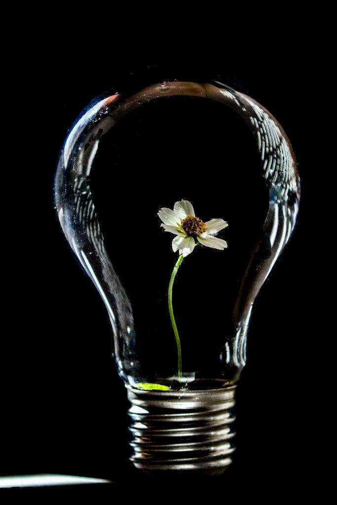 lightbulb with leaf